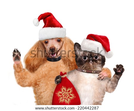 Cat and dog in red Christmas hats.