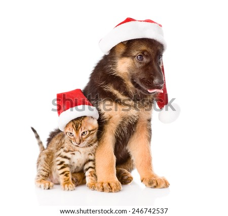 cat and dog in red santa hat sitting together. isolated on white background