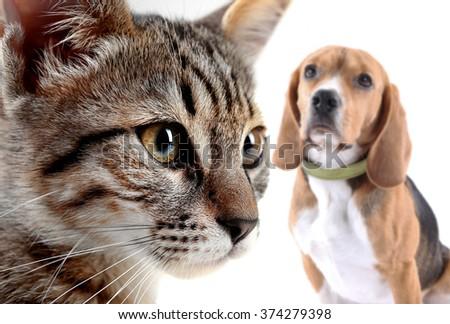 Cat and dog, isolated on white - stock photo