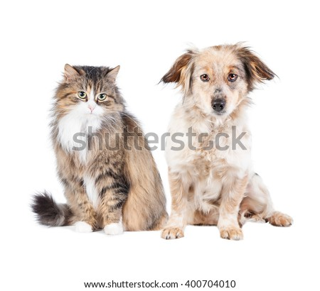 Cat and dog isolated on white  - stock photo