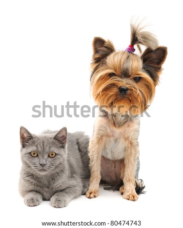 cat and dog isolated on white background - stock photo