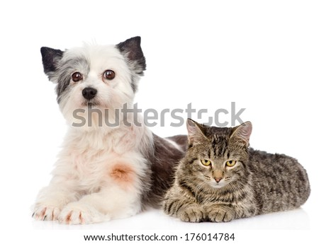 cat and dog lie nearby. isolated on white background - stock photo