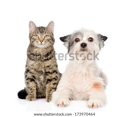 cat and dog looking at camera together. isolated on white background