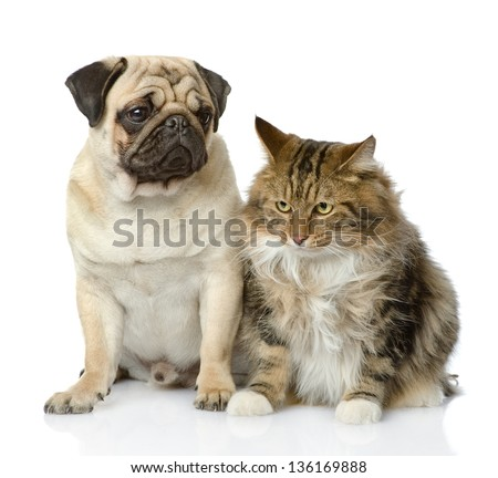 Cat and dog looking away. isolated on white background