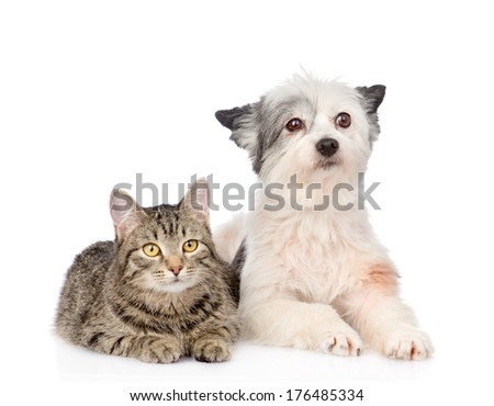 cat and dog lying together and looking at camera . isolated on white background - stock photo