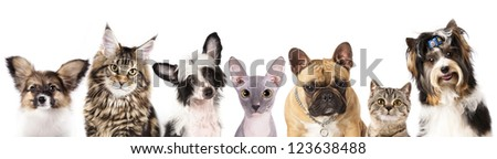 Cat and dog, medium group of animals - stock photo