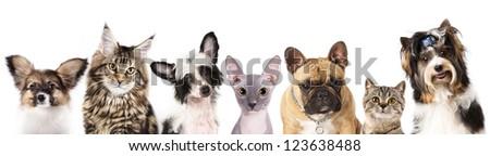 Cat and dog, medium group of animals - stock photo