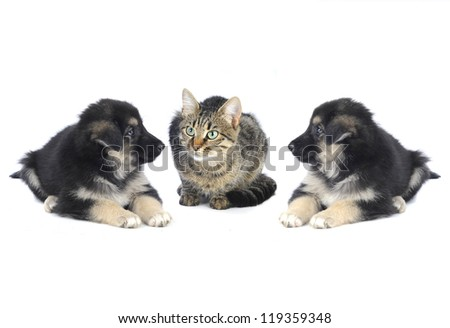 cat and dog  on a white background