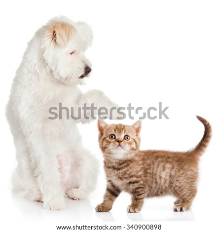 cat and dog on a white background.  Friends - stock photo
