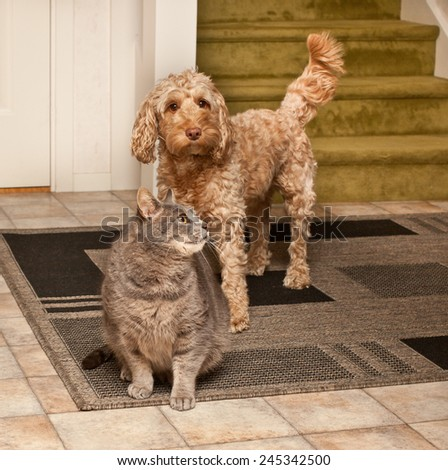 Cat and dog playing  - stock photo