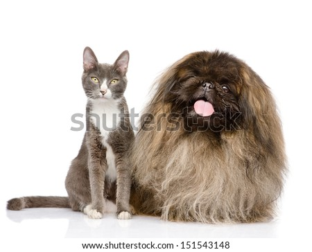 Cat and Dog posing. isolated on white background