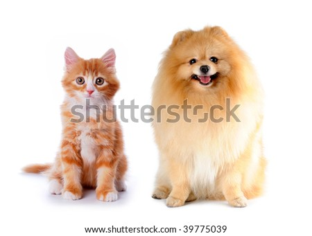 Cat and dog red color sitting isolated on white background - stock photo