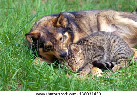 Cat and dog relaxing on the grass - stock photo