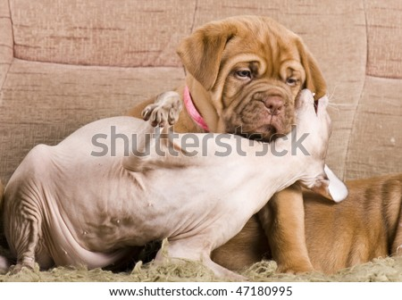 Cat and dog resting together on bed - stock photo