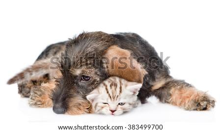 Cat and dog sleeping together. isolated on white background - stock photo