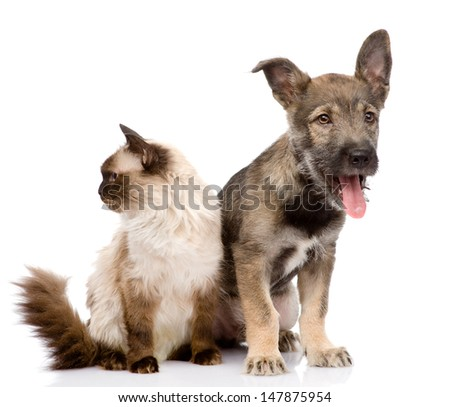 cat and dog together. focused on the cat. isolated on white - stock photo