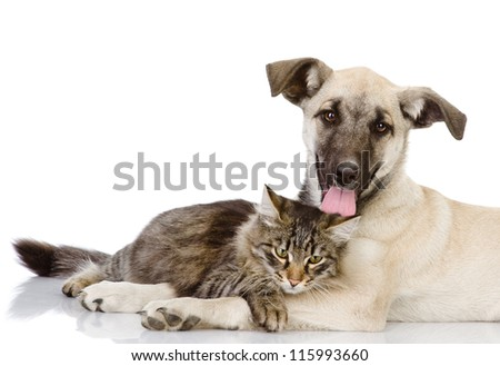 cat and dog together. Isolated on a white background - stock photo