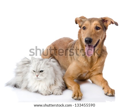 cat and dog together. isolated on white background