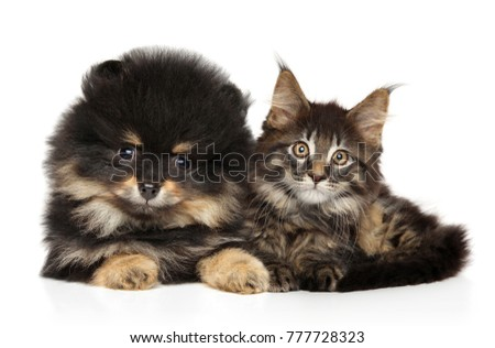 Cat and dog together on white background