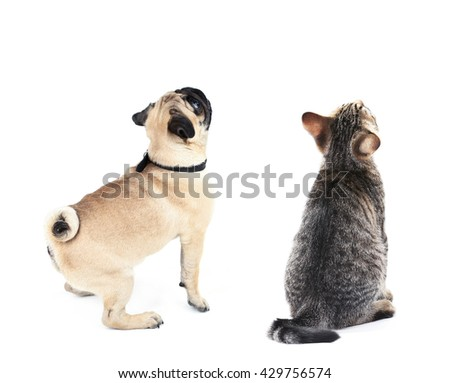 Cat and dog together, view from the back, isolated on white - stock photo