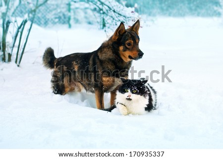 Cat and dog walking in the snow