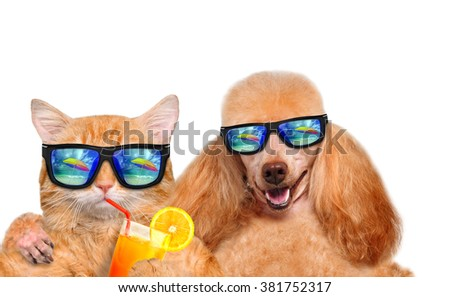 Cat and dog wearing sunglasses relaxing in the sea background. Isolated on white.