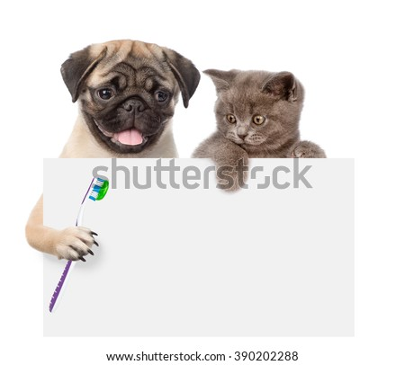Cat and dog with a toothbrush peeking from behind empty board. isolated on white background - stock photo