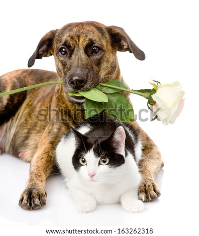 cat and dog with a white rose. isolated on white background - stock photo