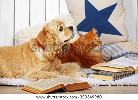 Cat and dog with books on sofa inside - stock photo