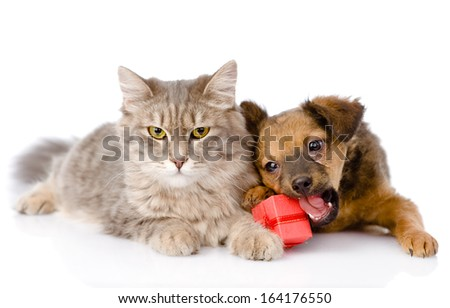 cat and dog with red box. isolated on white background - stock photo