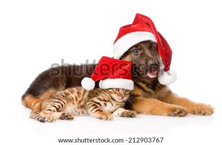 cat and dog with red hat. focus on cat. isolated on white background