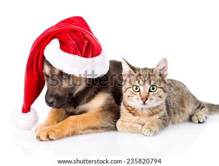 Cat and Dog with Red Santa Claus hat. isolated on white background