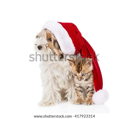 Cat and dog with red santa hat. isolated on white background