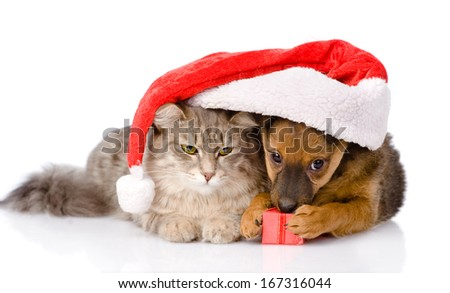 cat and dog with santa hat and red box. isolated on white background - stock photo