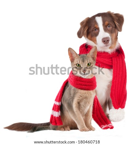 Cat and dog with shawl - sick