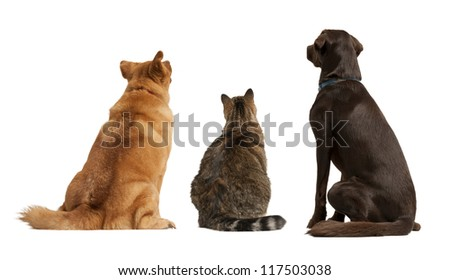 Cat and dogs looking up. Add your text above. - stock photo