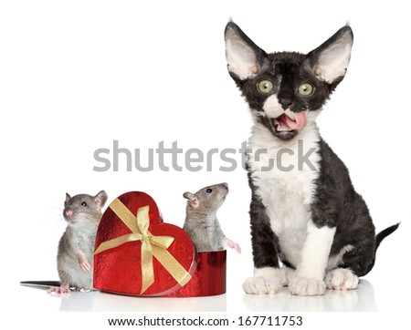 Cat and gift with mice on white background