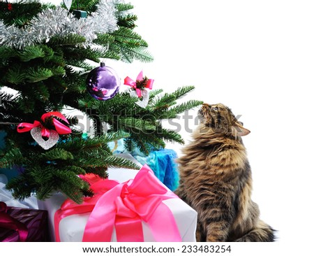cat and gifts under Christmas tree isolated on white - stock photo