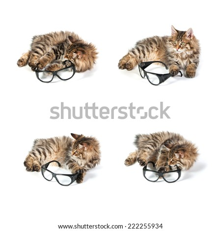 cat and glasses on white background. set - stock photo
