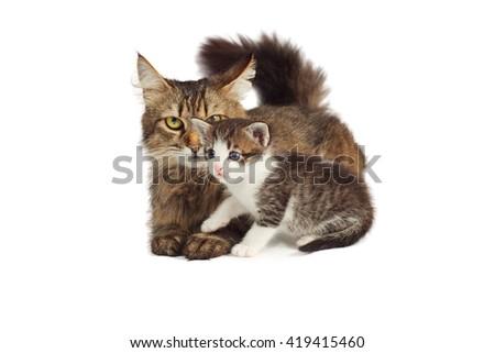 Cat and kitten - stock photo