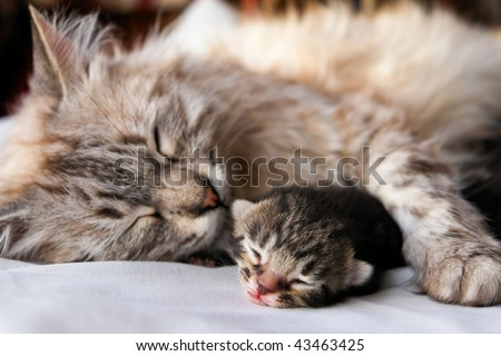 Cat and kitten hug and sleep in compassion - stock photo
