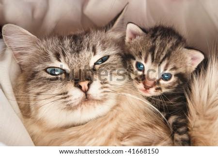 Cat and kitten hugs - stock photo