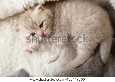 Cat and kitten lying and hugging