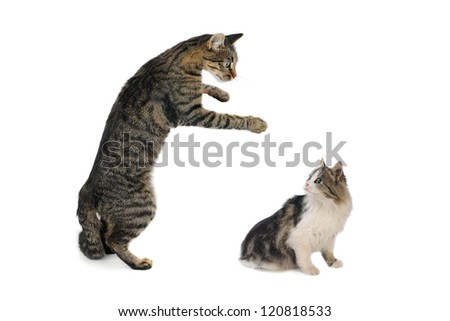 cat and kitten with the lifted paw