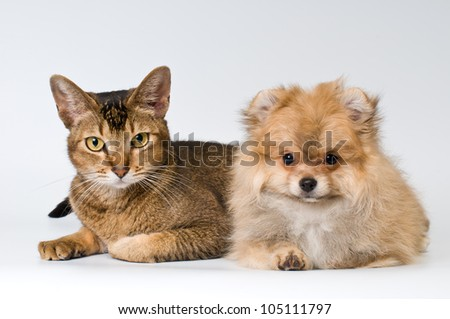Cat and puppy  in studio on a neutral background