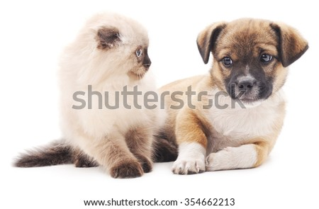 Cat and puppy isolated on a white background.