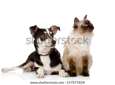 cat and puppy sitting in front. looking away. isolated on white background  - stock photo