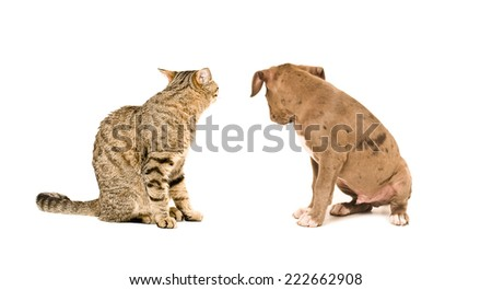 Cat and puppy sitting with his back to the camera - stock photo