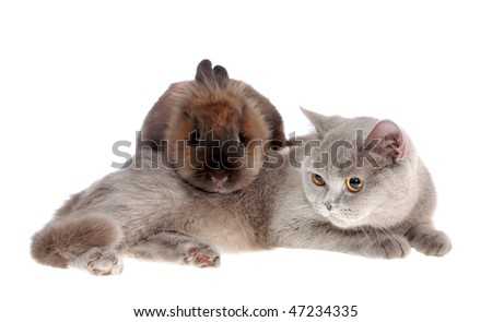 cat and rabbit on a white background, is isolated.