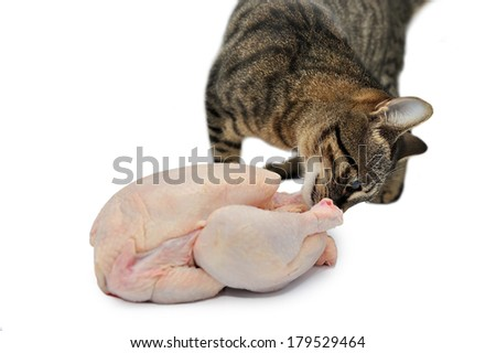 Cat and raw fresh chicken isolated on white background - stock photo